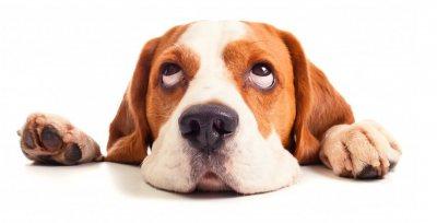 Основные заблуждения о питании собак | Реалкорм
